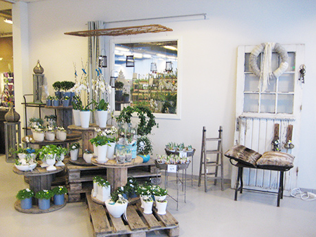 Växter & Inredningsartiklar - Skara Blomsterland